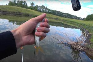 купить прикормки для рыбалки с усилителем эффекта