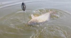 Покупка приманки для рыбалки в интернет магазине
